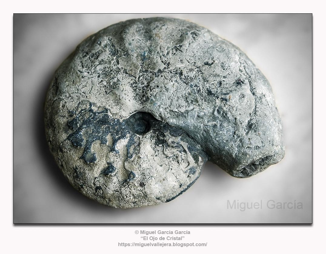 Fósil de Ammonites.