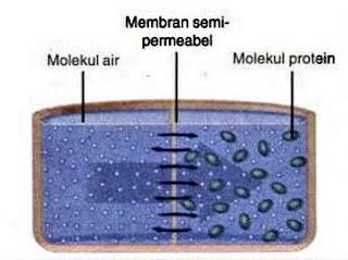 Osmosis transpor aktif