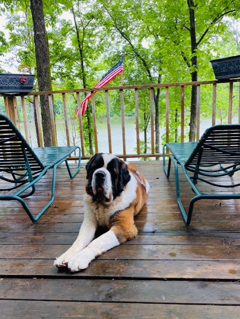 Paws for Reaction National Great Outdoors Month: Meet our featured pets enjoying the outdoors!