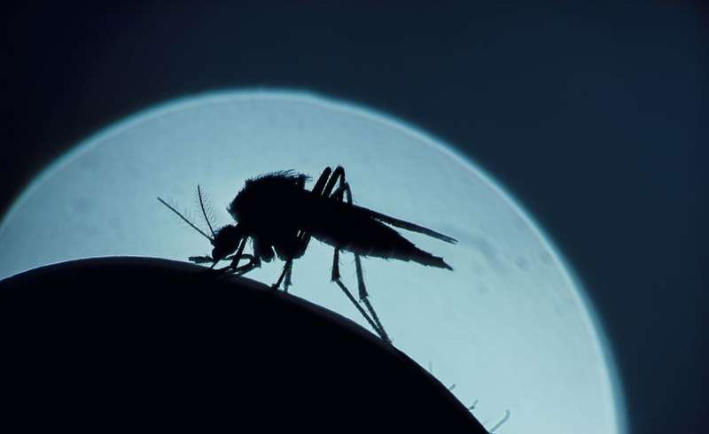 9 Ways to Keep Your Yard Mosquito Free