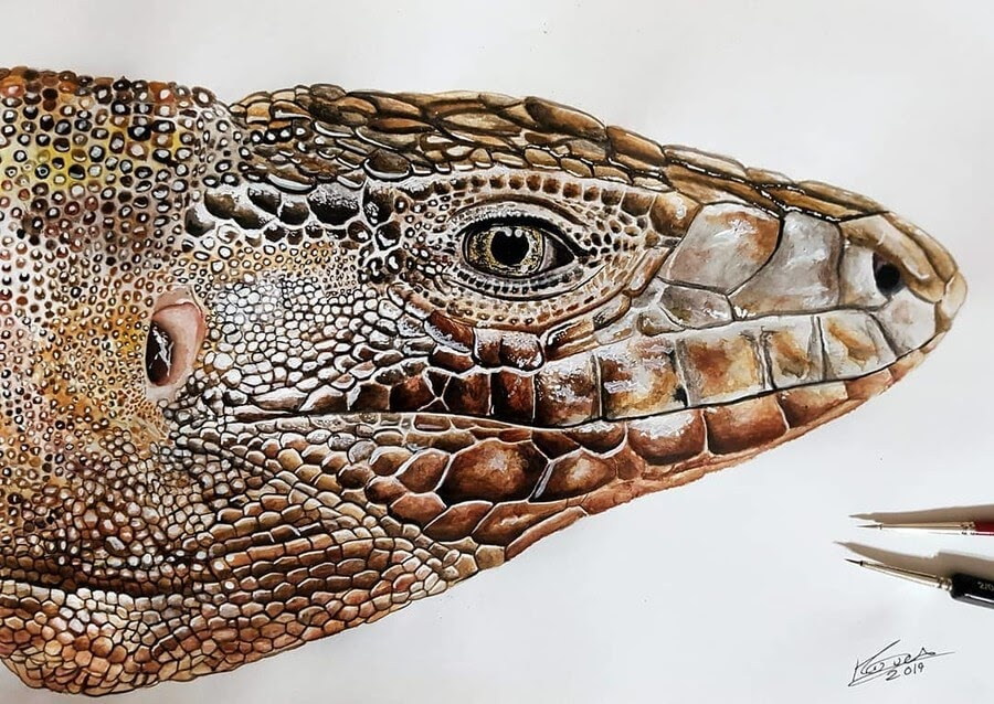11-Red Tegu-Kyle-Duca-Animal-Paintings-www-designstack-co