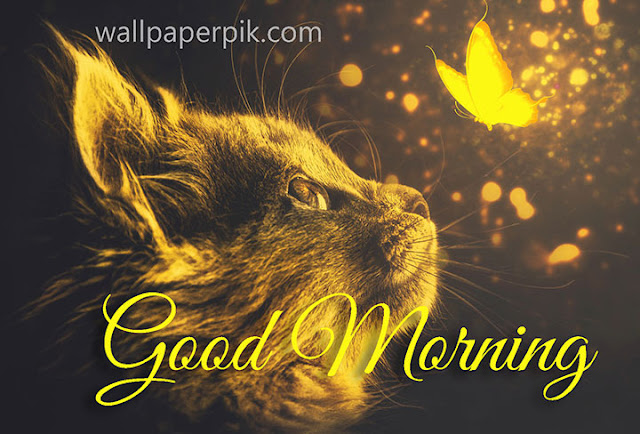 Good Morning Sweet And Cute Baby Hd Wallpaper