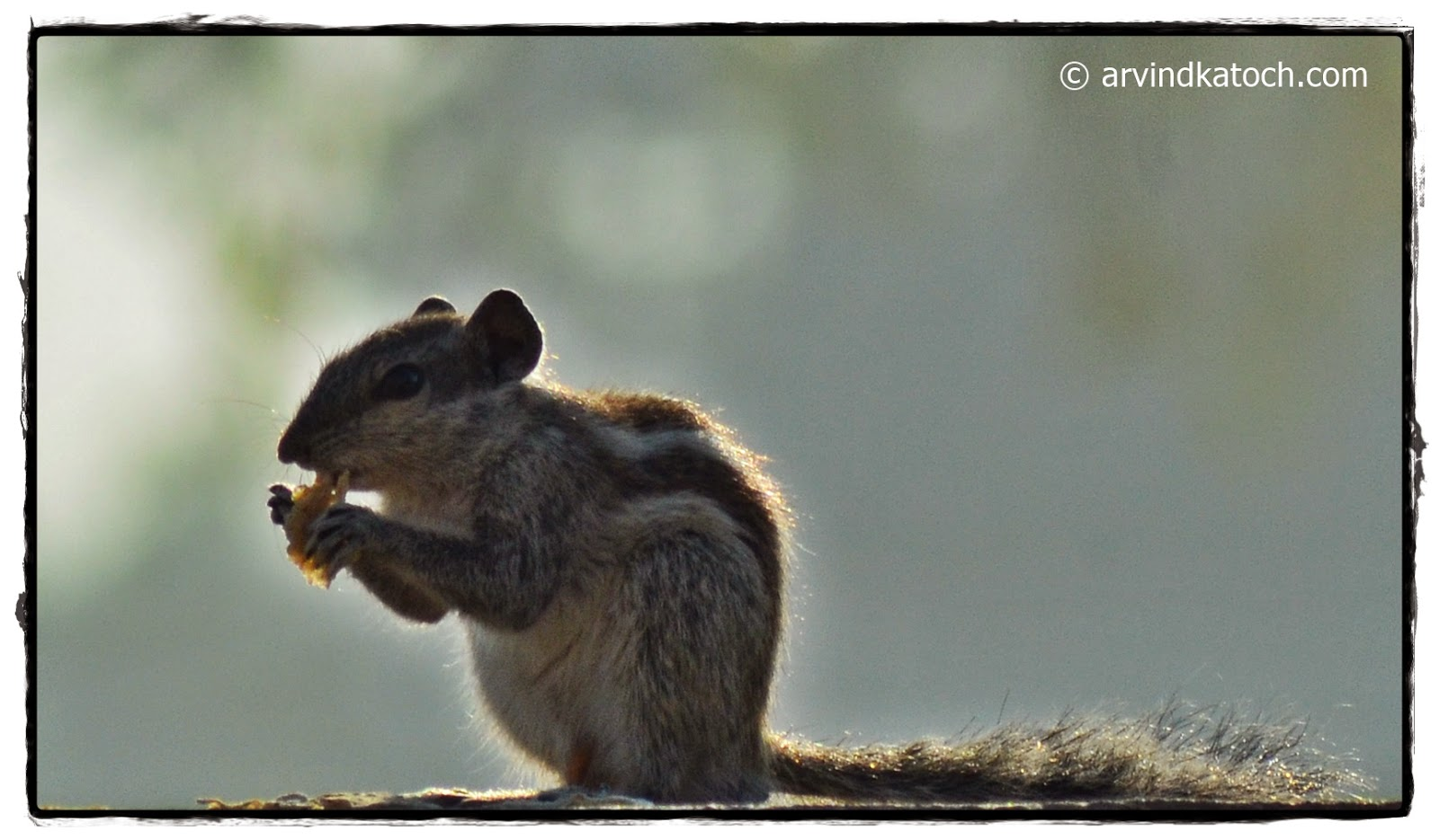 Beautiful Squirrel, Morning Sunlight,