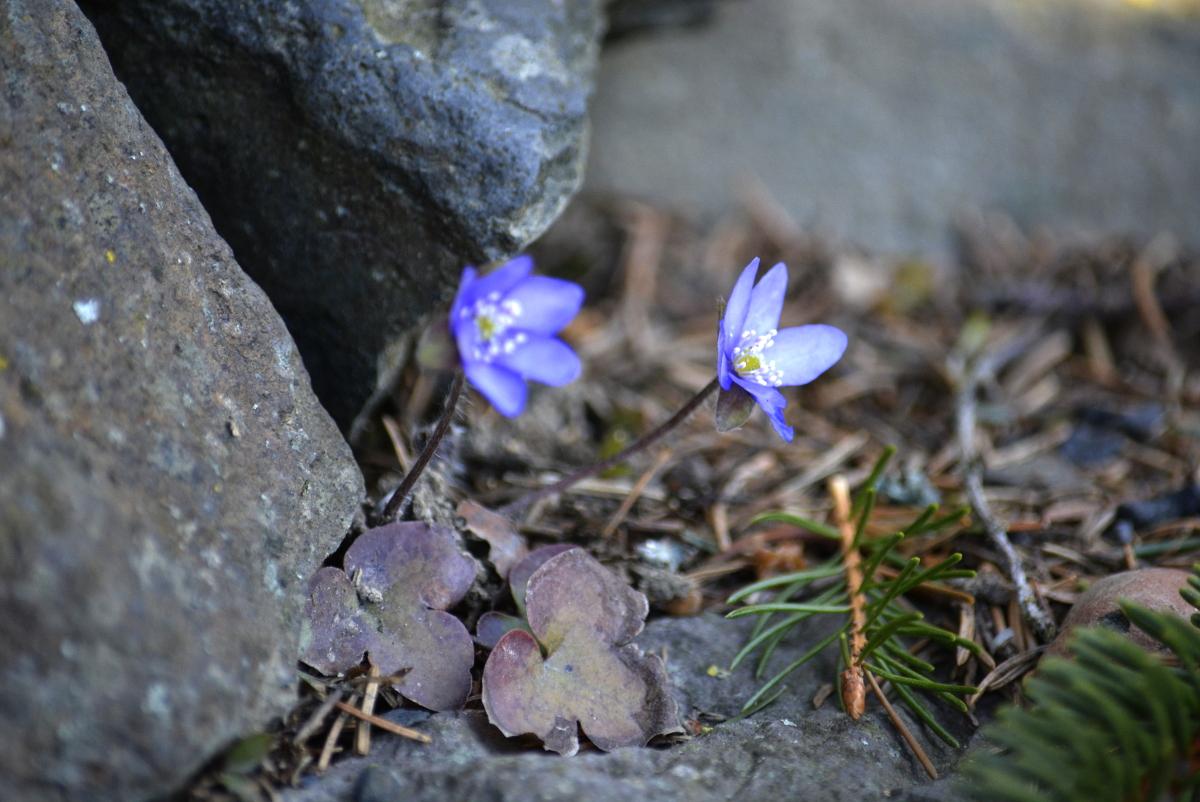 Leberbluemchen, Gartenblog