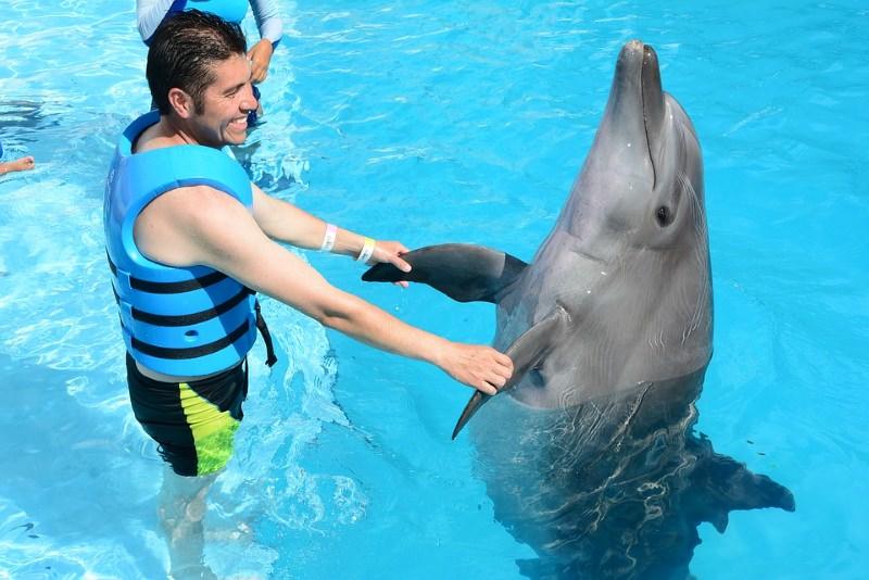 Interação de uma pessoa com golfinho