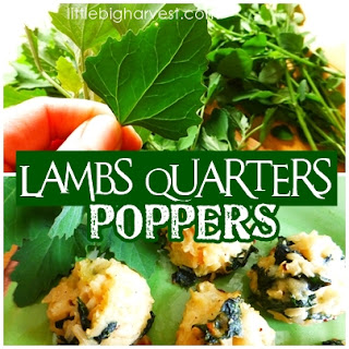 http://www.littlebigharvest.com/2015/06/lambs-quarters-poppers.html