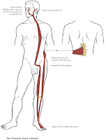 Anatomy of the Sinew Channels: Article Review