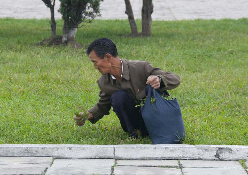 Στην Βόρεια Κορέα αναγκάζονται να τρώνε γρασίδι