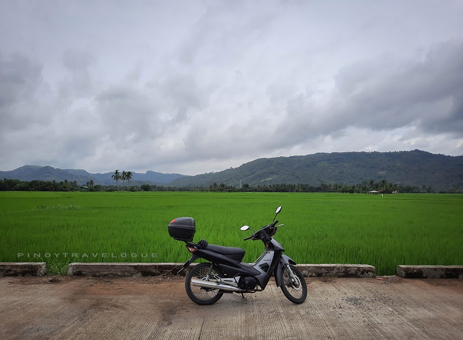 Rice fields of Sta. Maria. Laguna