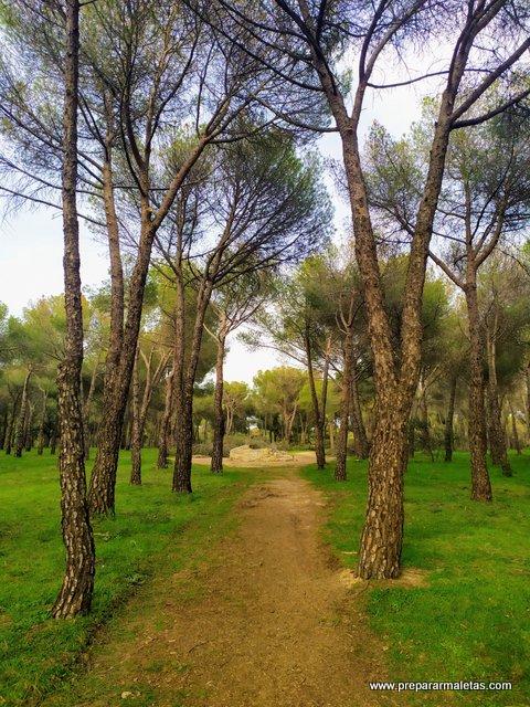 rutas fáciles cerca de Madrid, dehesa Navalcarbón