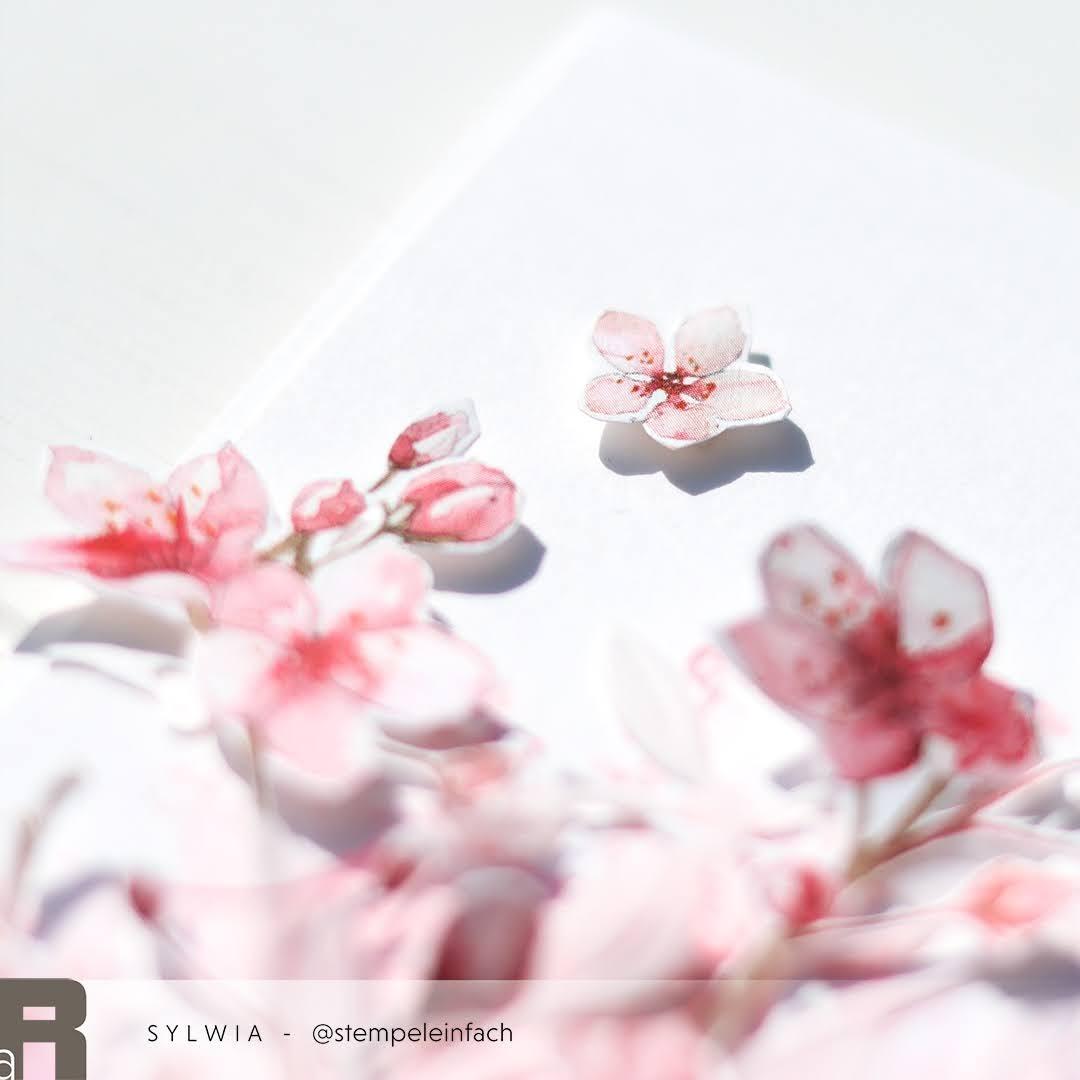 Kirschblueten-Alexandra Renke
