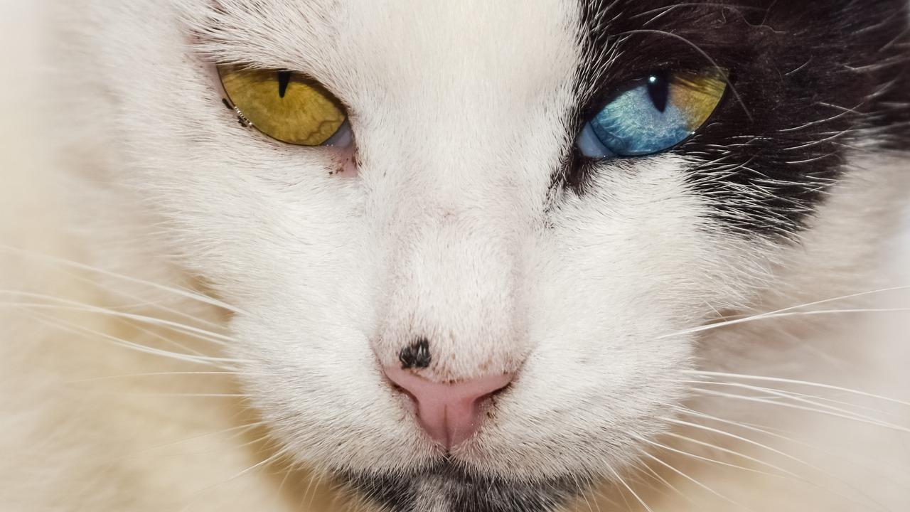 Comportement du chat: pourquoi est-ce étrange?