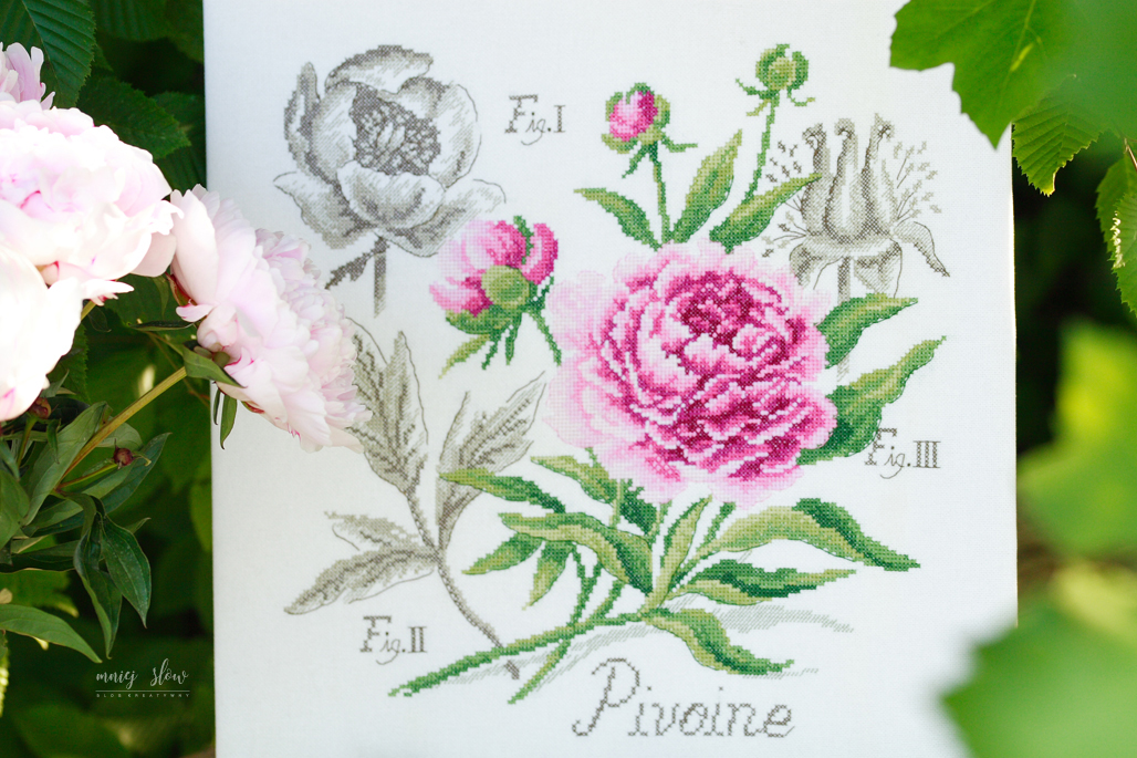 Étude à la Pivoine - Véronique Enginger #2