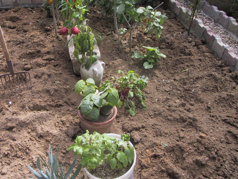 What is organic and how to start home and garden for Preparing soil for vegetable garden