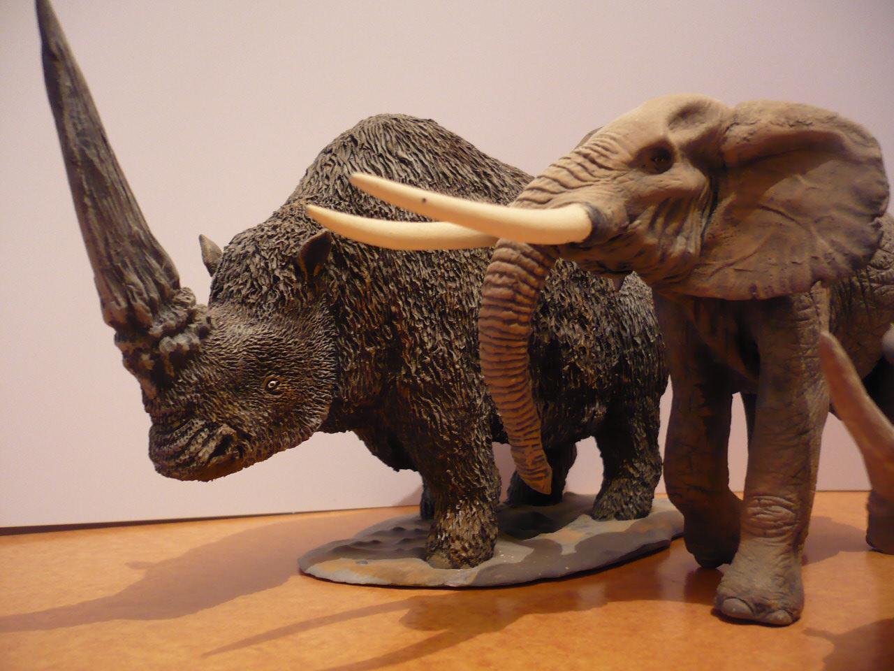 Elasmotherium - JungleKey.fr Image