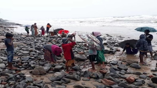 """الهند.. البحر """"يقذف"""" ذهبا على شواطئ أوبادا!"""