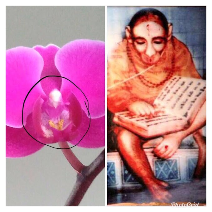 Shirdi  Sai Baba Came To Bless Us In The Form of An Orchid Plant