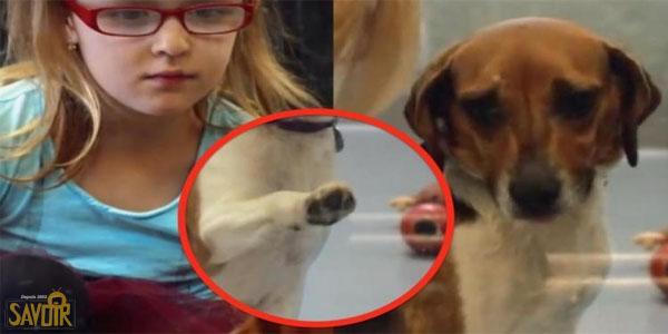 Cette jeune fille va à la fourrière avec ses parents. elle voit ce qu'aucun adulte ne remarque...