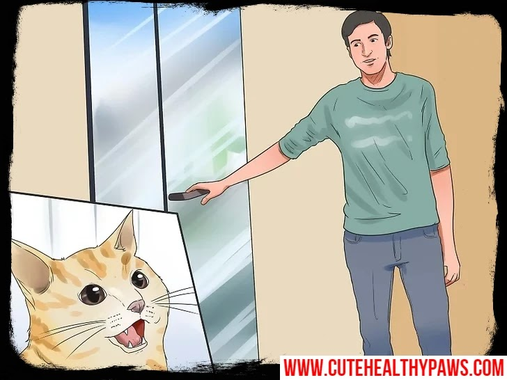 How to get your cat to stop biting and scratching