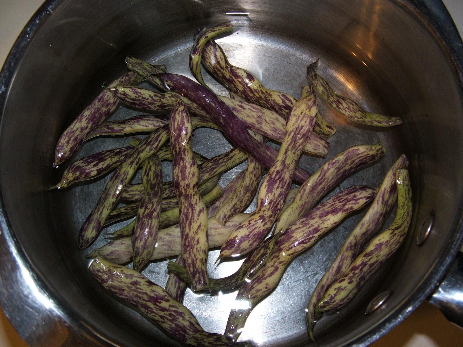 God S Growing Garden Quot Dragon Lingerie Quot Beans