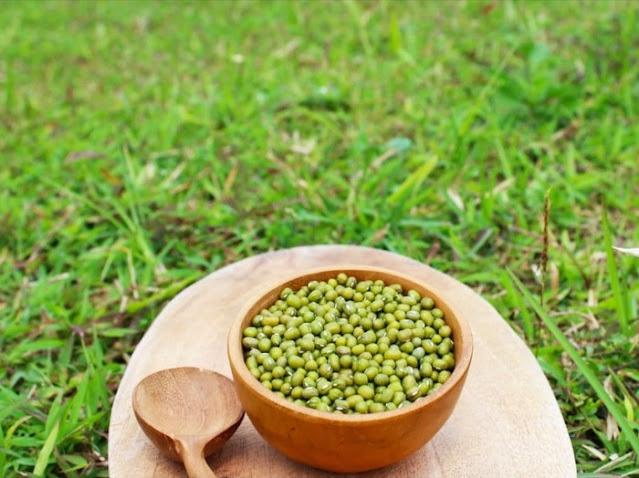pakan perkutut kacang hijau
