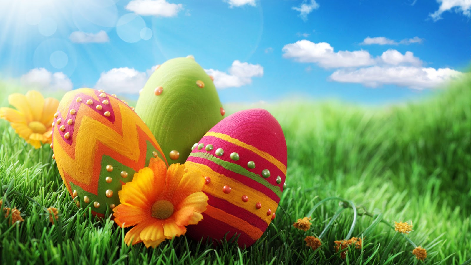 Funny Easter Bunny Eggs images pics Wallpapers (2)
