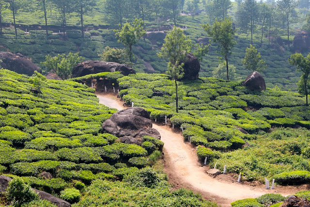 Top 10 Romantic Honeymoon Places in India, munnar weather