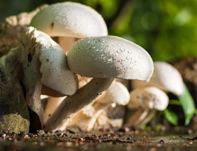 Mushroom exports in Hyderabad