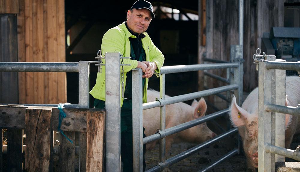Aufs richtige Schwein gesetzt