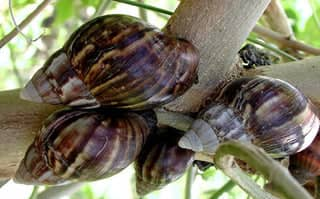 Snail feeds and Categories