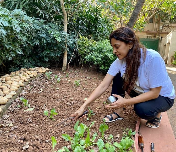juhi-chawla-planted-tomatoes-and-methi-in-her-farm-house-photo-viral