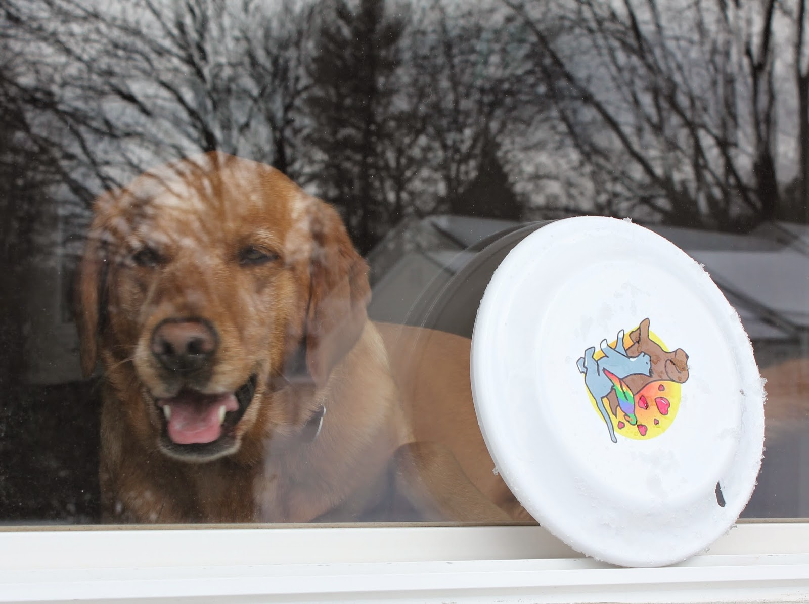 dog looking through window for frisbee wordless wednesday