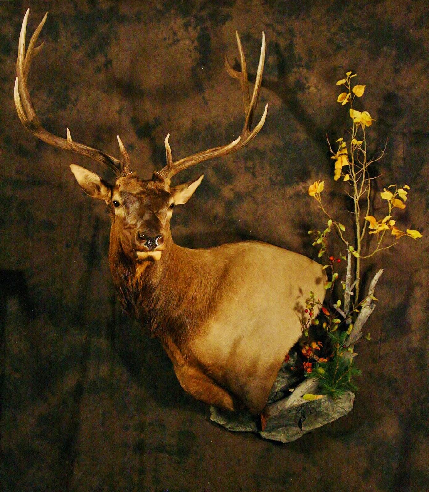 Deer Head Mount >> Taxidermy by Josh Hunt: Elk