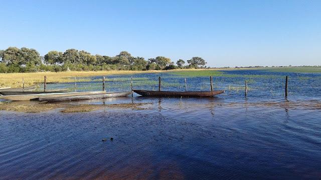 Mokoros en el embarcadero del Delta del Okawango