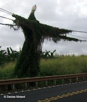 Man in the wires (2009) - Along Farrington Highway, Oahu, HI