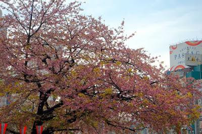 Pink and yellow trees at Ueno Park Tokyo Japan