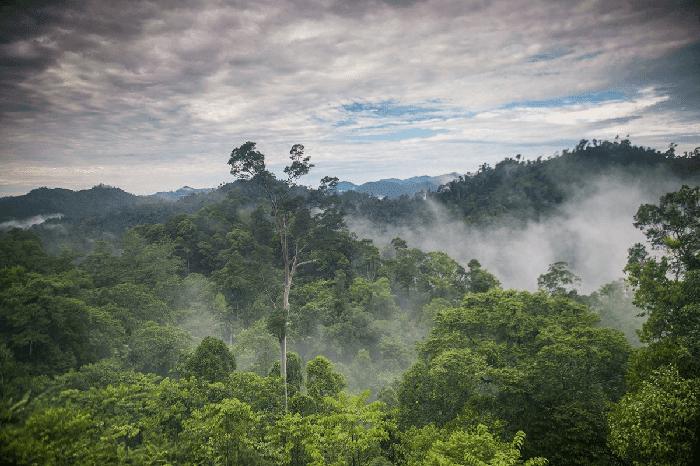 Apa Itu Hutan hujan tropis? Ciri-ciri, Fungsi, Persebaran, dan Jenisnya