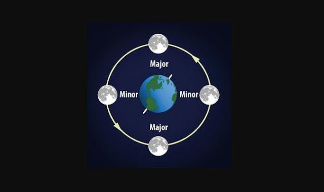 1. Perhatikan Periode Mayor dan Minor