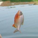 Pancing Laut Dalam Pulau Besar YouTube