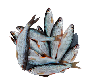 Fish PNG Transparent Photo Download Free