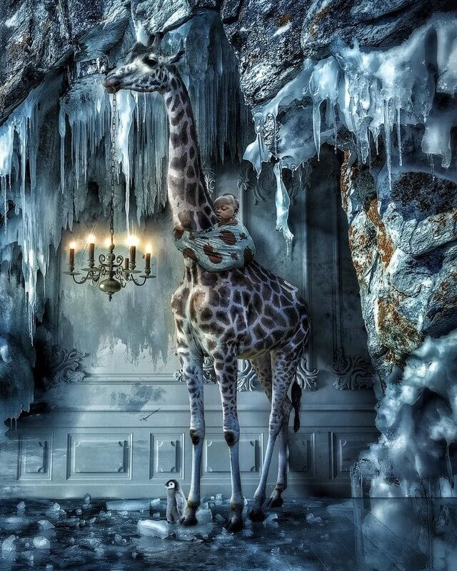 14-Getting-colder-Marcel-van-Luit-Digital-Art-Animals-Photos-www-designstack-co