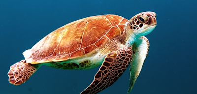 What about this beautiful creature's name? (image)