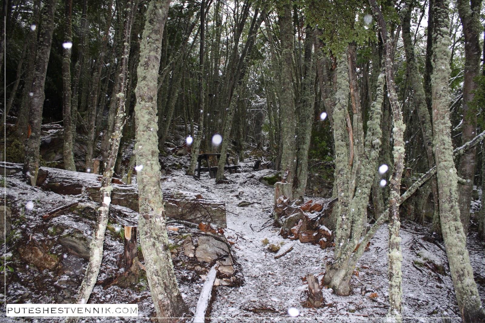Снег падает в лесу на Огненной Земле