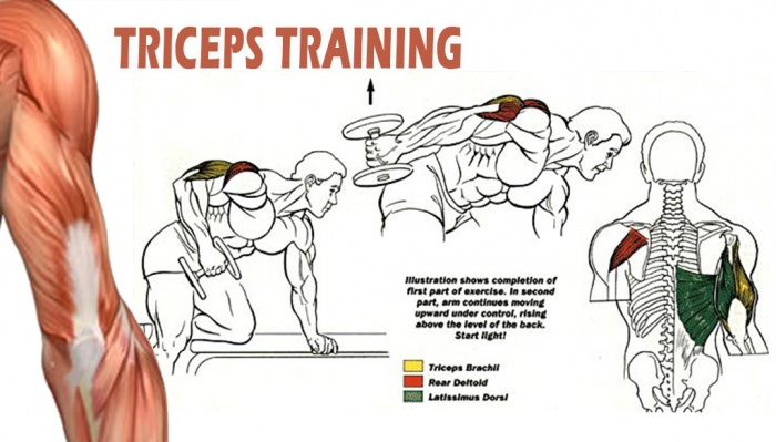 Top Four Tricep Workouts For Mass - all-bodybuilding.com