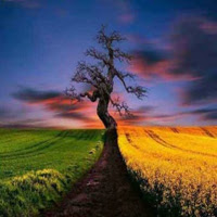WowEscape-Beautiful Natur…