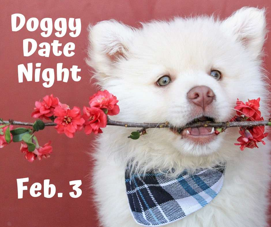 Doggy Date Night Wishes Photos