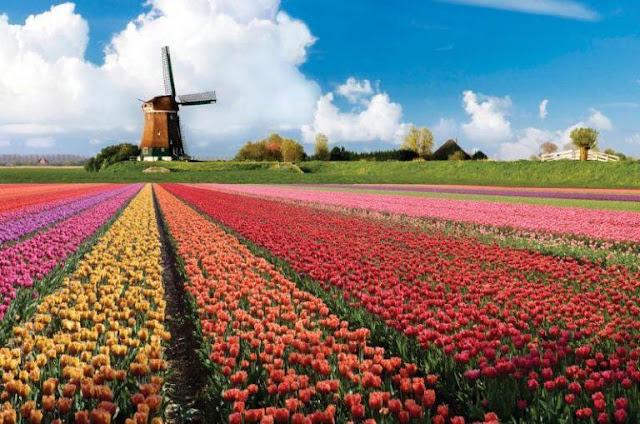 """هولندا.. حديقة """"كيوكينهوف"""" من أجمل حدائق الأزهار في العالم وأكبرها"""