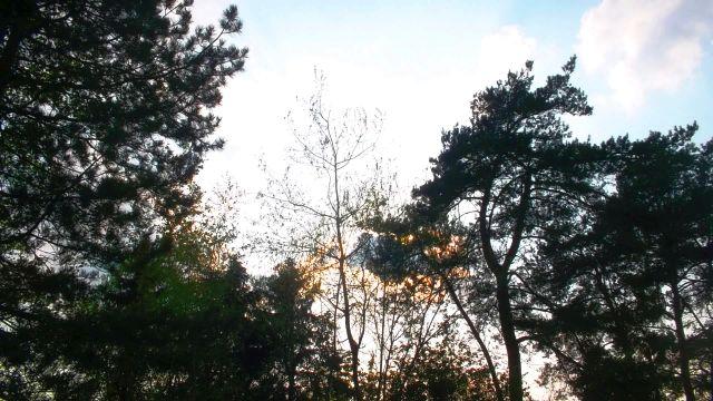 Sonnenlicht bricht durch Bäume