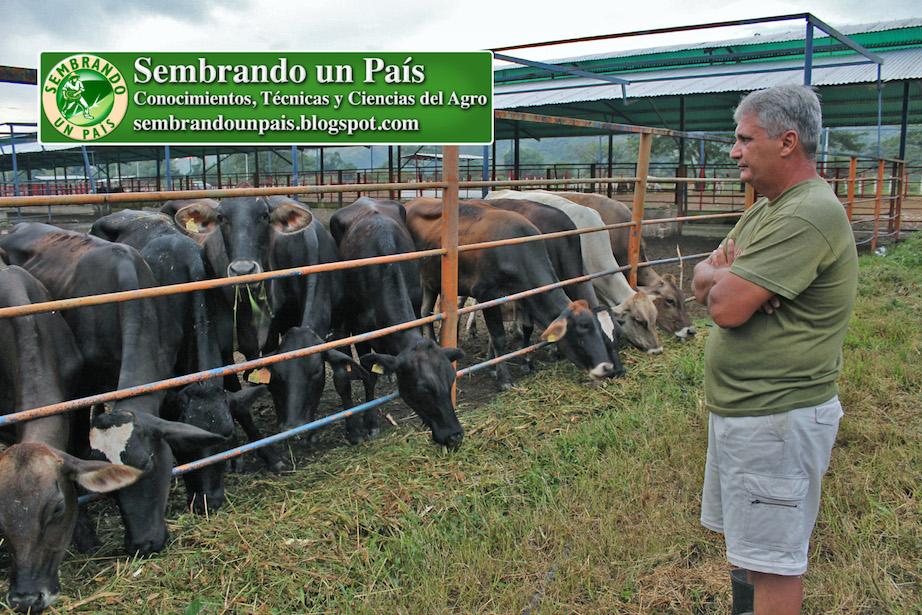 Francisco Afonso en rancho ganadero