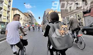 Due piccoli cagnolini felici e interessati a tutto quanto accade intorno al Cyclopride Day di Milano
